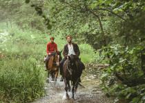 Ud og stjæle heste
